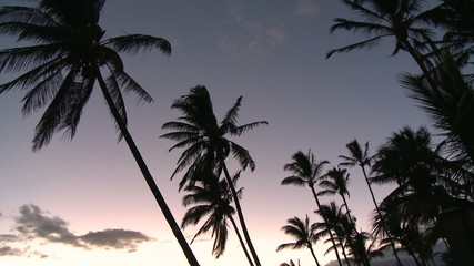 Palm Trees at Sunset - Clip 1