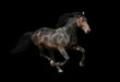 Dark stallion running on black background - 78887672