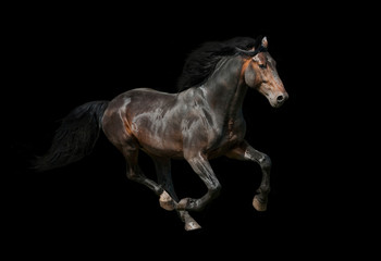 Dark stallion running on black background