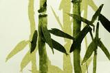 Bamboo / Texture