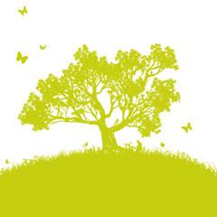 Vereinzelter Baum auf der Wiese