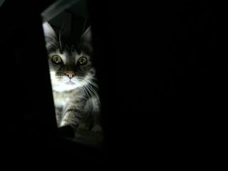кошка следит
