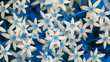White Ornithogalum Flowers with Blue Leaves (16:9 Aspect Ratio)