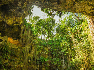 Natural cave with picturesque lianas, Mexico