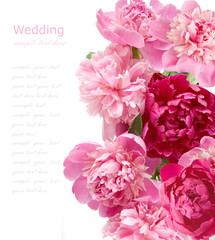 Peony flowers background isolated on white
