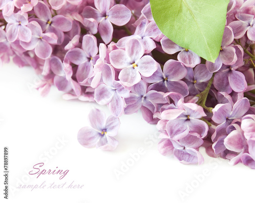 Keuken foto achterwand Lilac Lilac flowers bunch isolated on white background