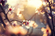 Beautiful nature scene with blooming tree and sun flare - 78899022