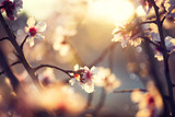 Fototapety Beautiful nature scene with blooming tree and sun flare