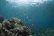 海底に差し込む光とハナゴイの群れ
