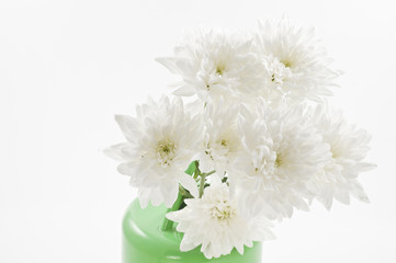 White fresh flowers in a watering-can.