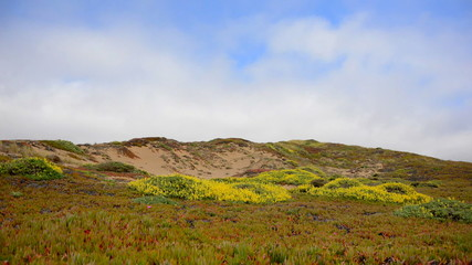 Time Lapse of Sand Dune at Point Reyes National Park