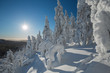 Bright winter day in Koli National Park