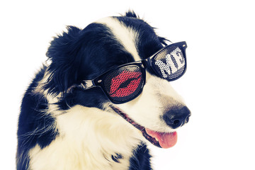 chien border Collie avec lunettes