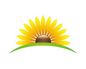 sunflower v.1
