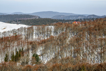 Winter landscape of Forest in Vosges mountain, France