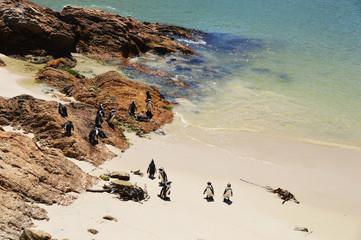 Hermanus betty' s bay - cap de bonne espérance, - Afrique du sud