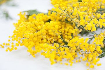 Mimose wallpaper
