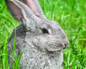 Rabbit sitting in grass, smiling at camera