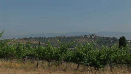 View of Vineyard from Tuscan countryside