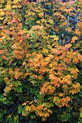 foglie in stagione autunnale