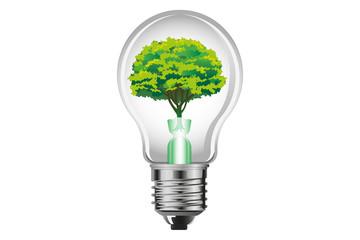 light bulb and big tree