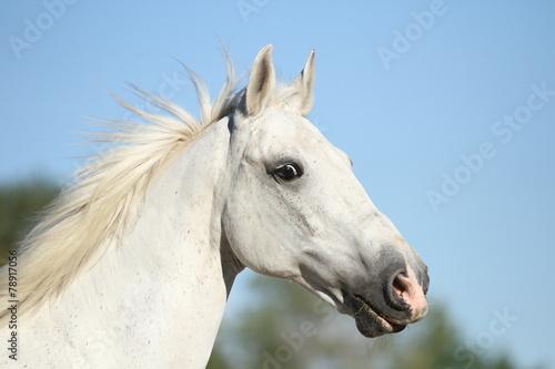 Staande foto Paardrijden Portrait von einem Schimmel