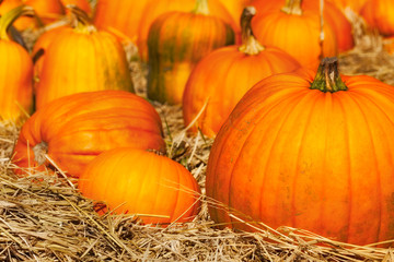 Pumpkins in a field of straw. Close up detail