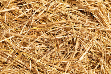 Straw or hay close up background