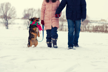 Young couple holding hands with dog walking in the snowy field