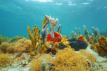Colorful sea sponges under the water