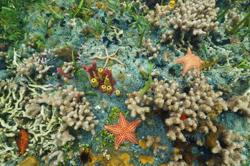 Colorful seabed with starfishes in Caribbean sea
