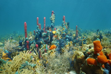 Underwater coral reef with colorful marine life