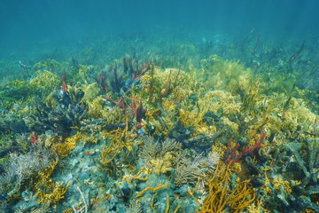 Underwater landscape on lush colorful coral reef