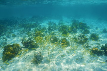 Underwater landscape with corals and shoal of fish