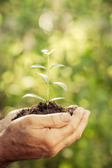 Young plant in hands against green spring background