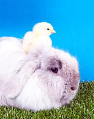 Ostern/Hase und Küken