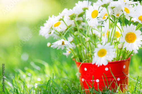 Fotobehang Bloemen Spring flowers