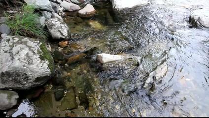 Panoramic shot of wild river in Canada