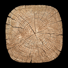 Cross section of tree trunk showing growth rings on black