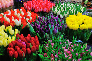 Colorful tulips on sale in flower market