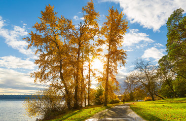 Seattle Lake Washington in autumn. Tall trees with golden leaves