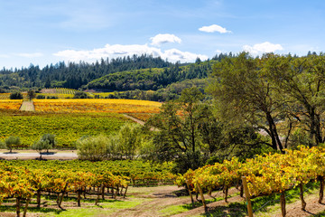 California wine country landscape in autumn