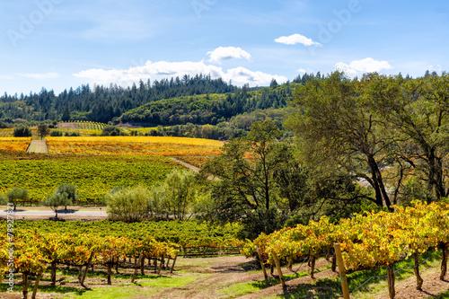 California wine country landscape in autumn - 78927821