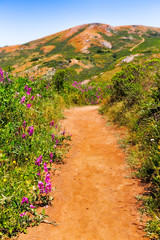 California hiking trail with wildflowers and a view of hills
