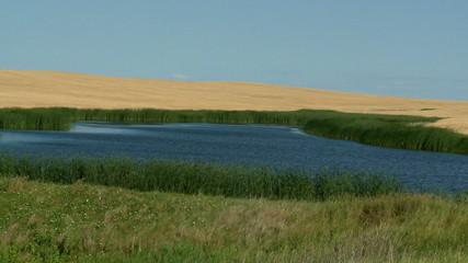 GrassPond2-2011
