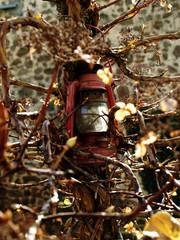 lantern on the tree