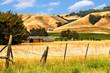 Leinwandbild Motiv California landscape of golden hills, oak trees and vineyards