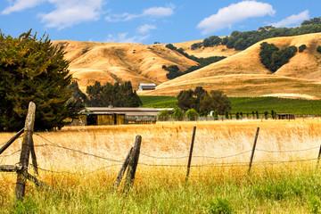 California landscape of golden hills, oak trees and vineyards