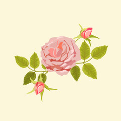 Vector illustration of tea-rose
