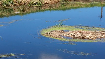 Lakes, Wetlands, Freshwater